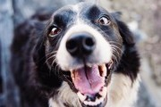 These Are The Smartest Dog Breeds In The World, Ranked