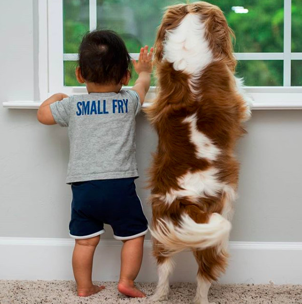 Proof Baby And Dogs Can Be Best Friends